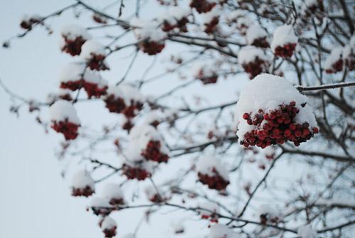 talvea1
