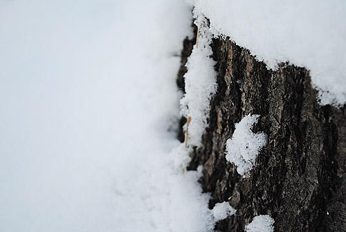 talvea5