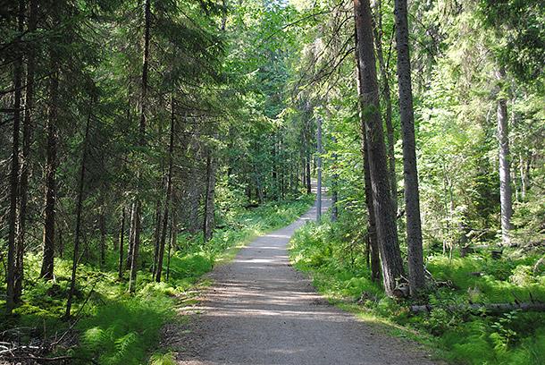 summerforest01