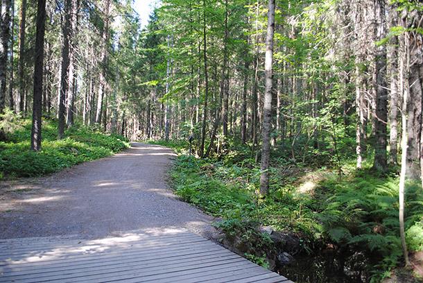 summerforest08
