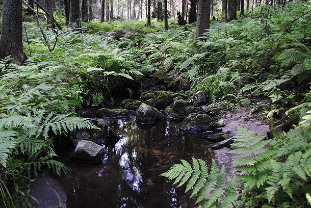 summerforest11