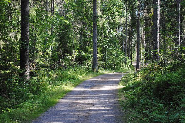 summerforest12