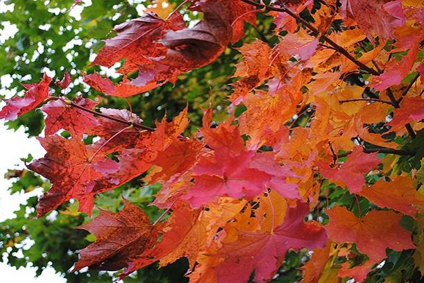 autumn2013_03