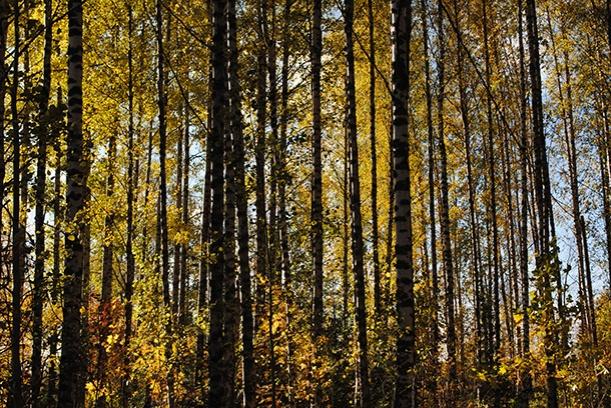 autumn2013_16