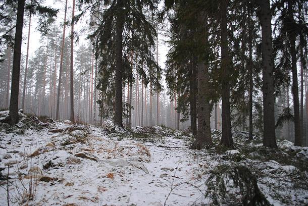 talvimetsa1