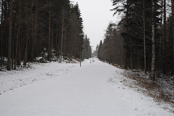 talvimetsa7