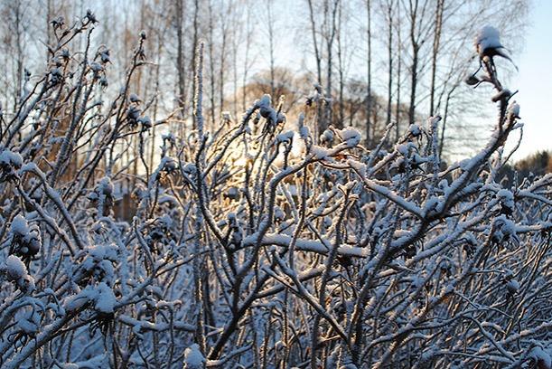 winter2014_02