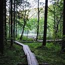 Kuopion metsissä